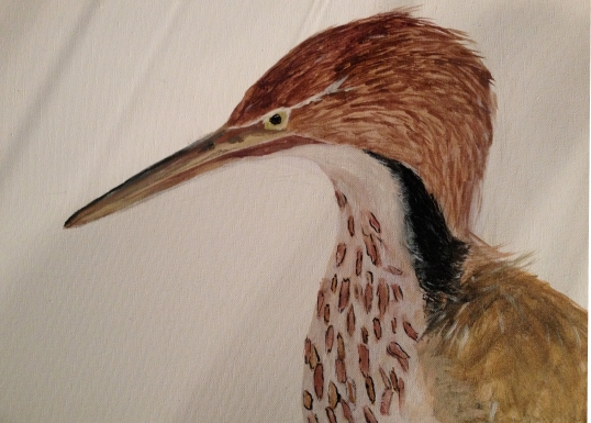 Painting 1B's Fur, Feathered, and Scaled Project
